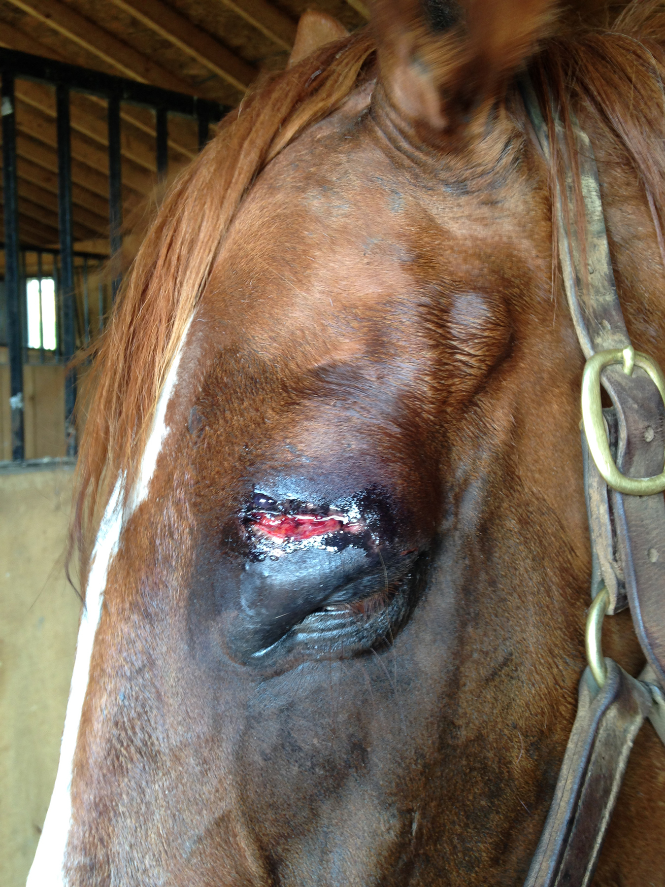 The next day after having his eye cleaned and ointment applied.