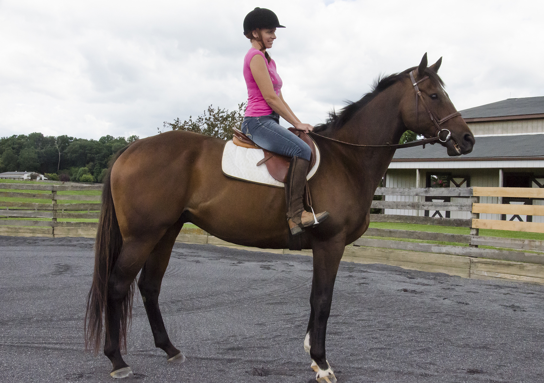 *ADOPTED*6 Year Old Dark Bay Gelding. Career Earnings: $4,446. 16.1H