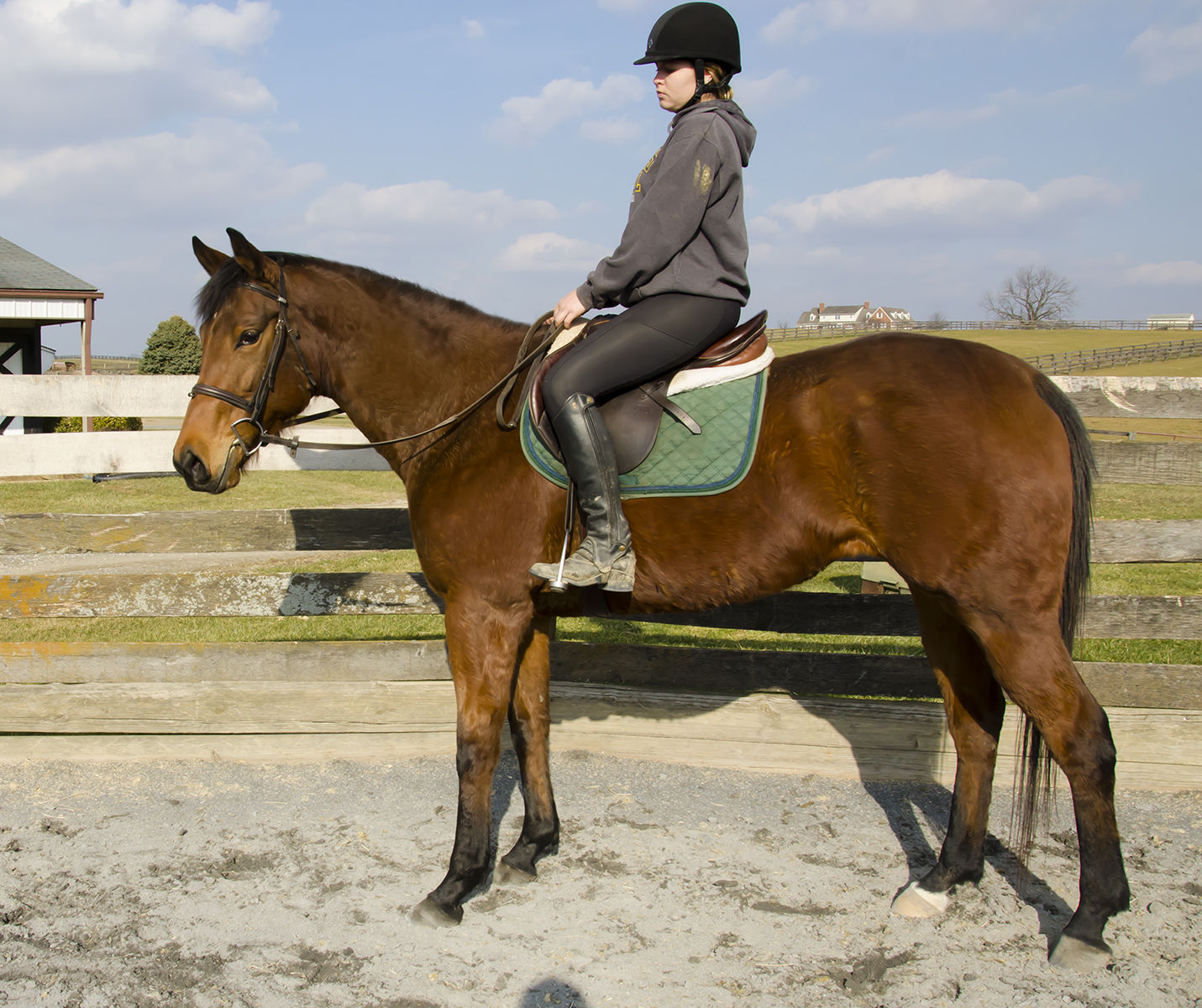 BAY VIEW SISTERS 7 Year Old Bay Thoroughbred Filly 16.1H