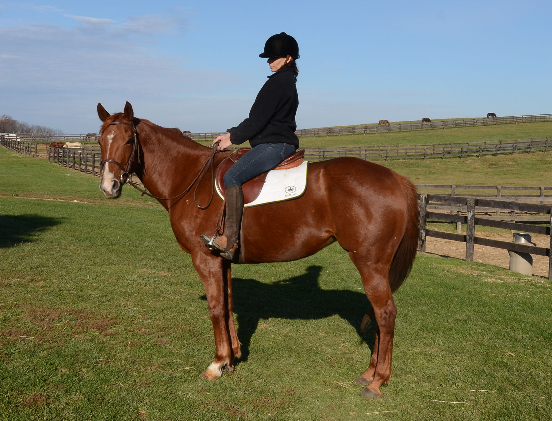 DEVINE BY DESIGN 13 Year Old Chestnut Thoroughbred Mare