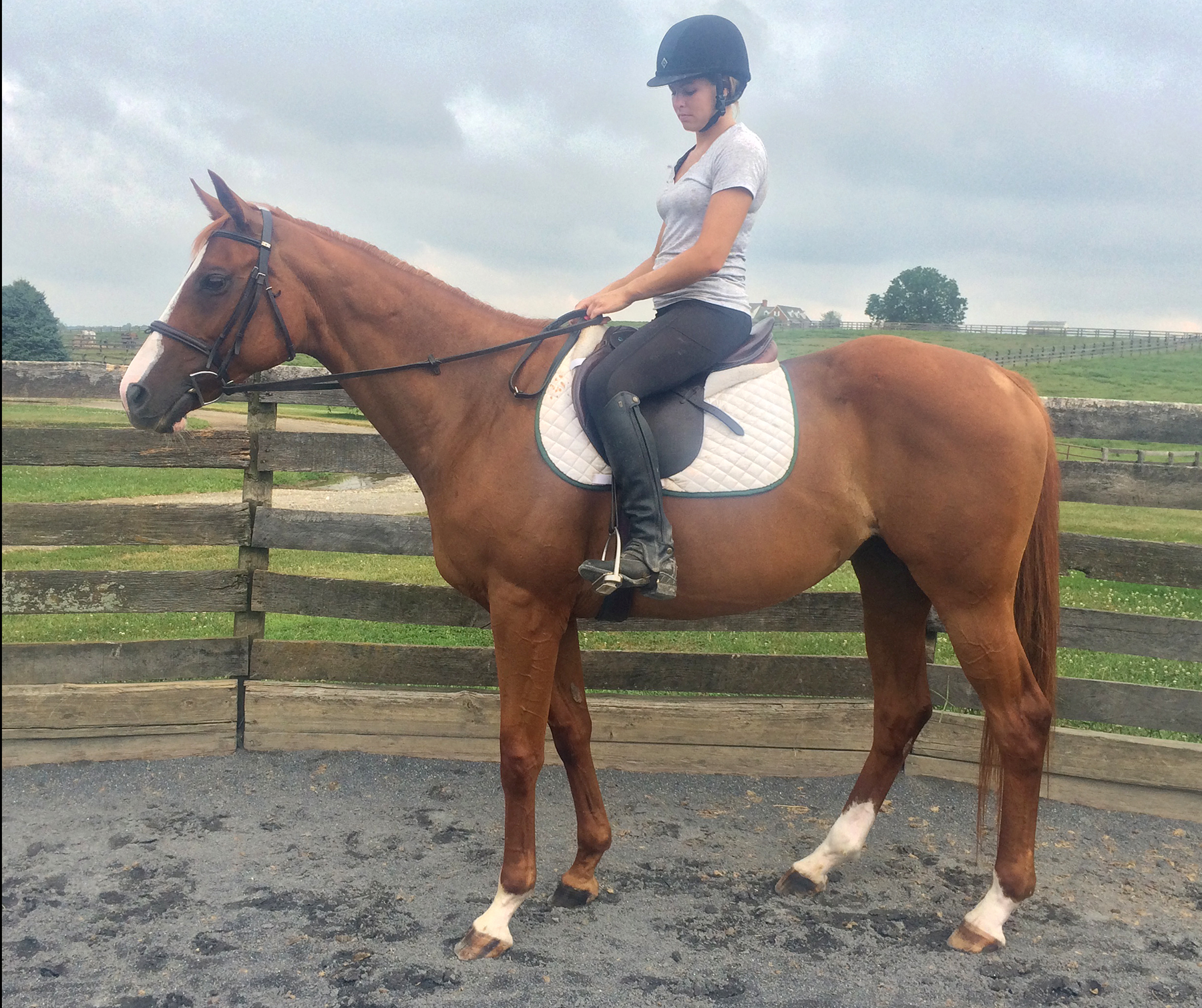 *ADOPTED* FANCY11 year old Chestnut Thoroughbred MareCareer Earnings: $51,01016 H