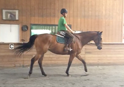 *ADOPTED* HAMEE 5 Year Old Bay Thoroughbred Gelding 16.1 H