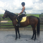 *ADOPTED*JERSEY ZAPPER5 Year Old Dark Bay Thoroughbred Mare15.3H