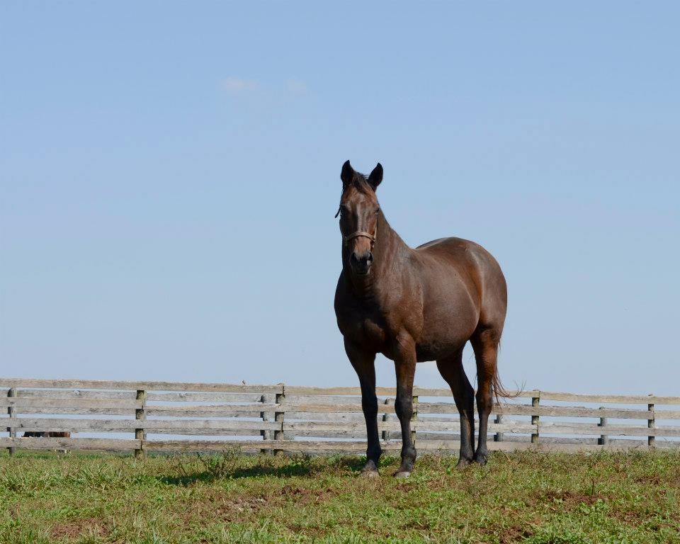 Multiple Stakes Winner Private Slip lives in sanctuary at Foxie G.