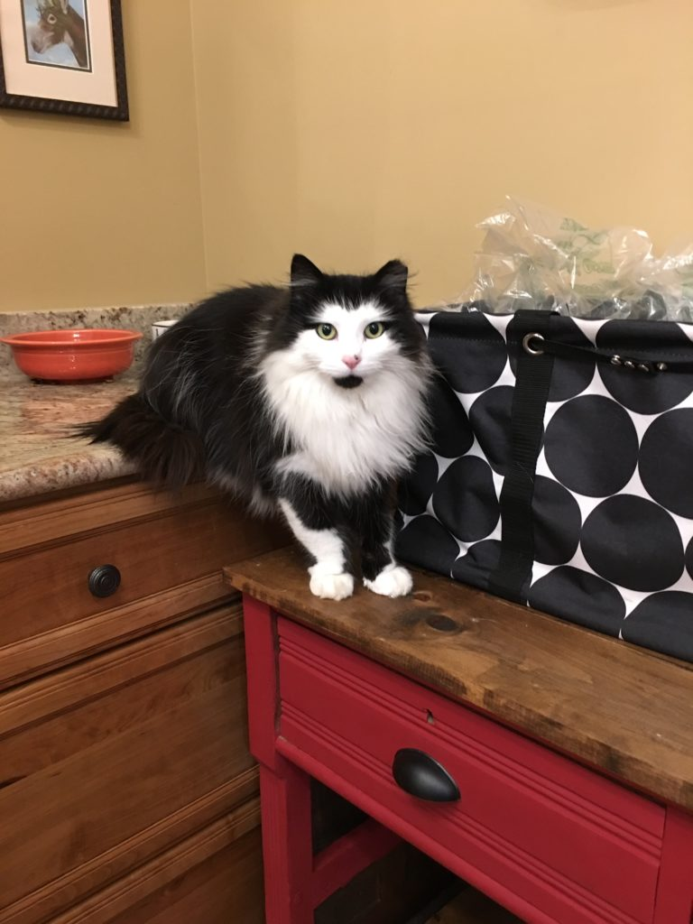 black and white long haired cat sitting on a counter