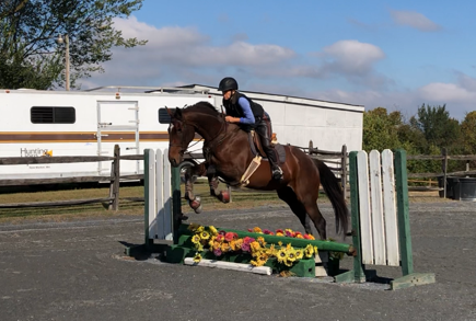 horse and rider jumping a course