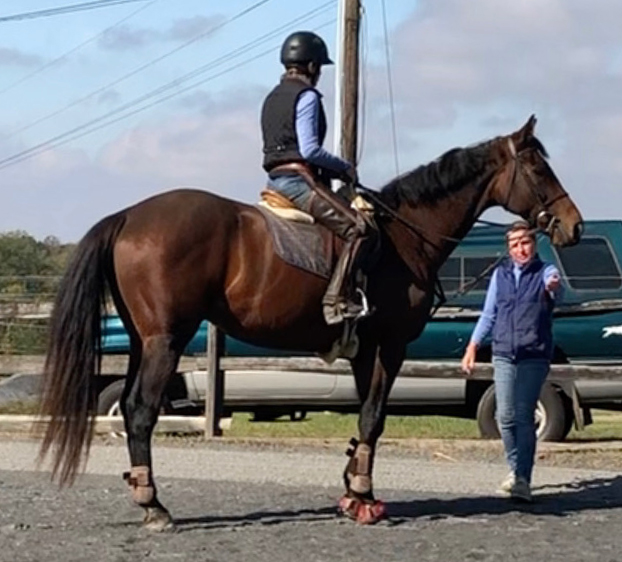 horse and rider standing in an outdoor arena