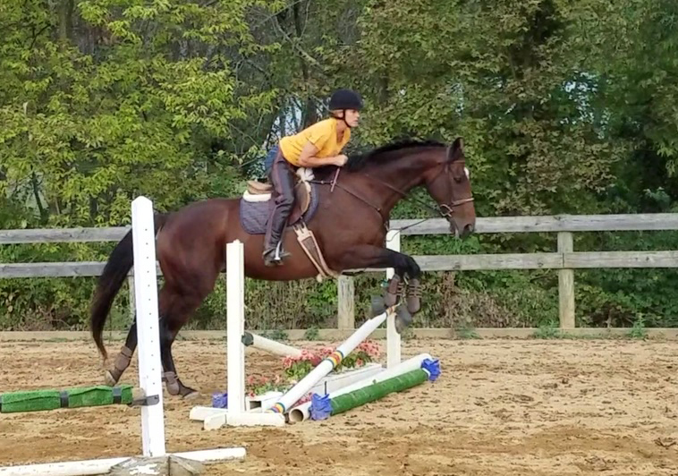 horse jumping in an outdoor arena