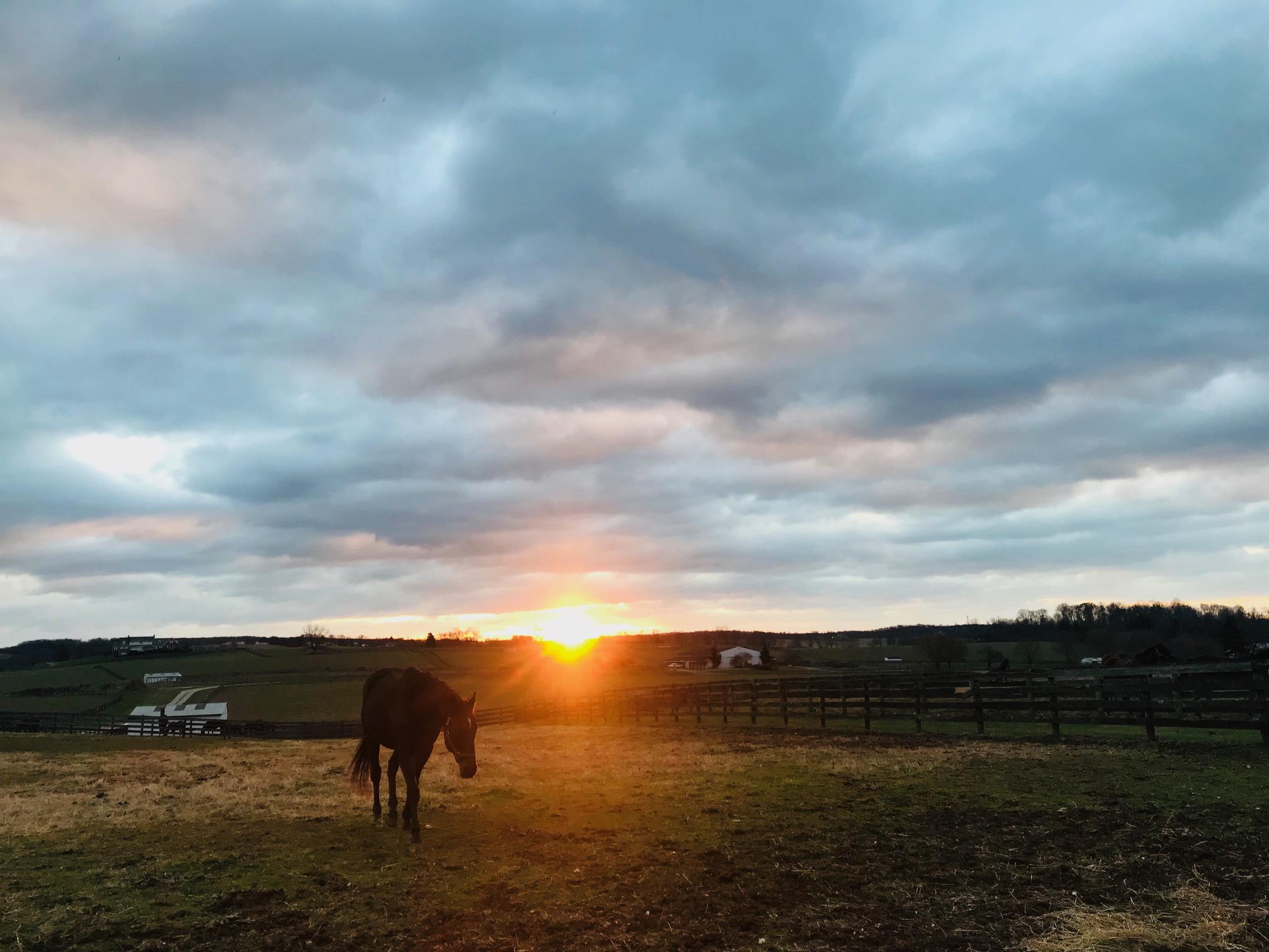 Jack o' Lantern at sunrise.