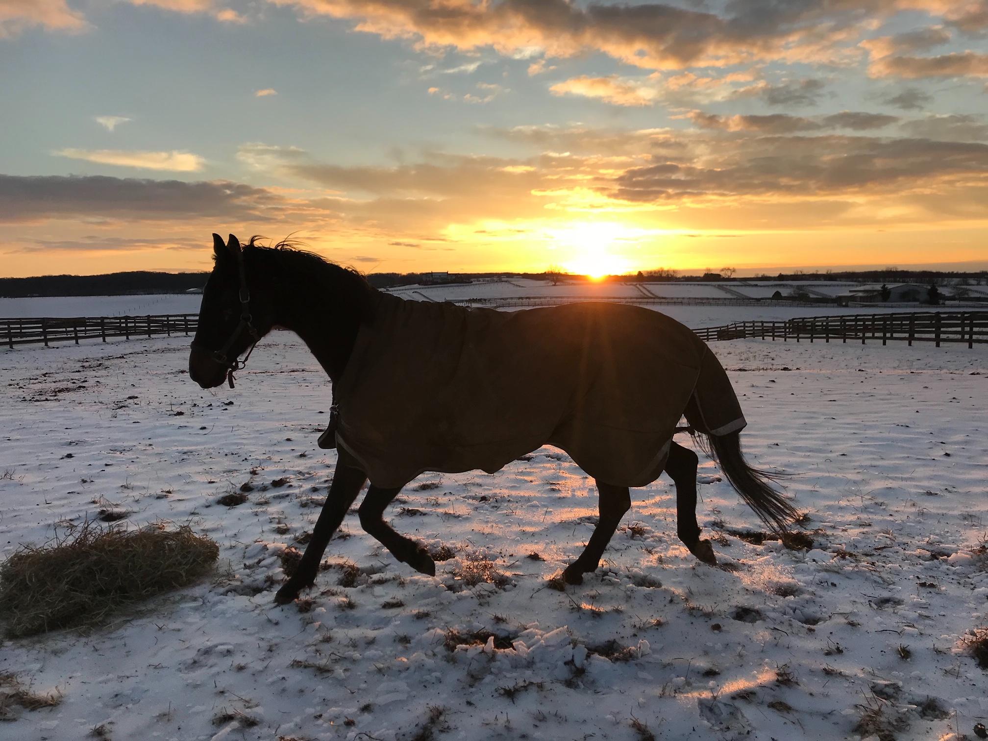 Jack o' Lantern feeling frisky on a winter morning at sunrise.