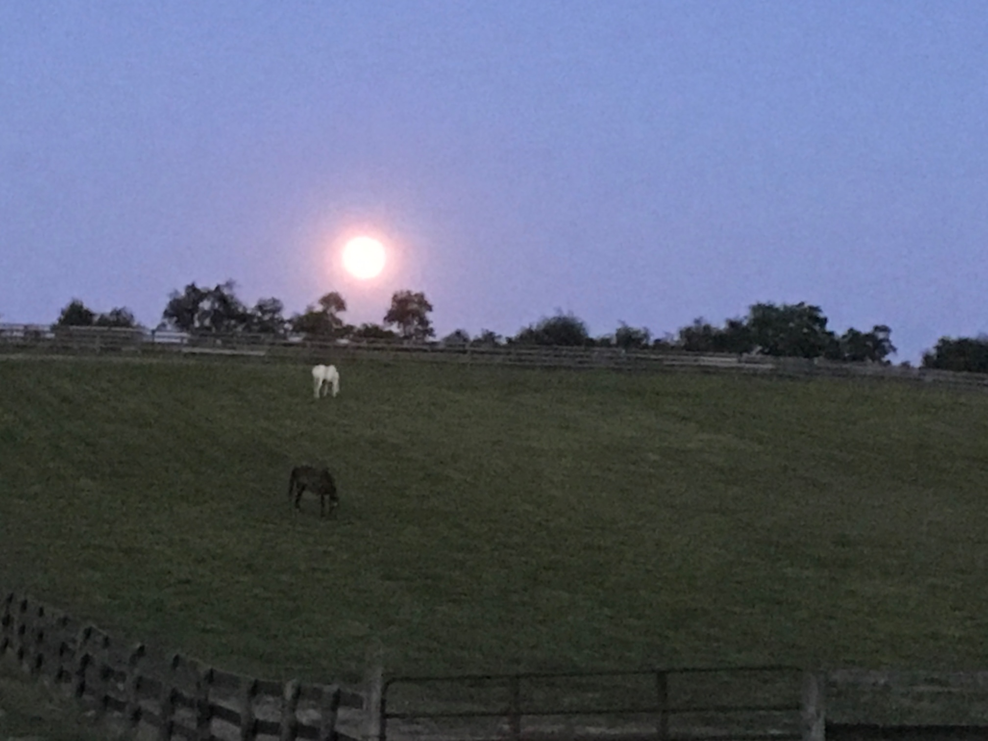 The farm on a perfect June night.