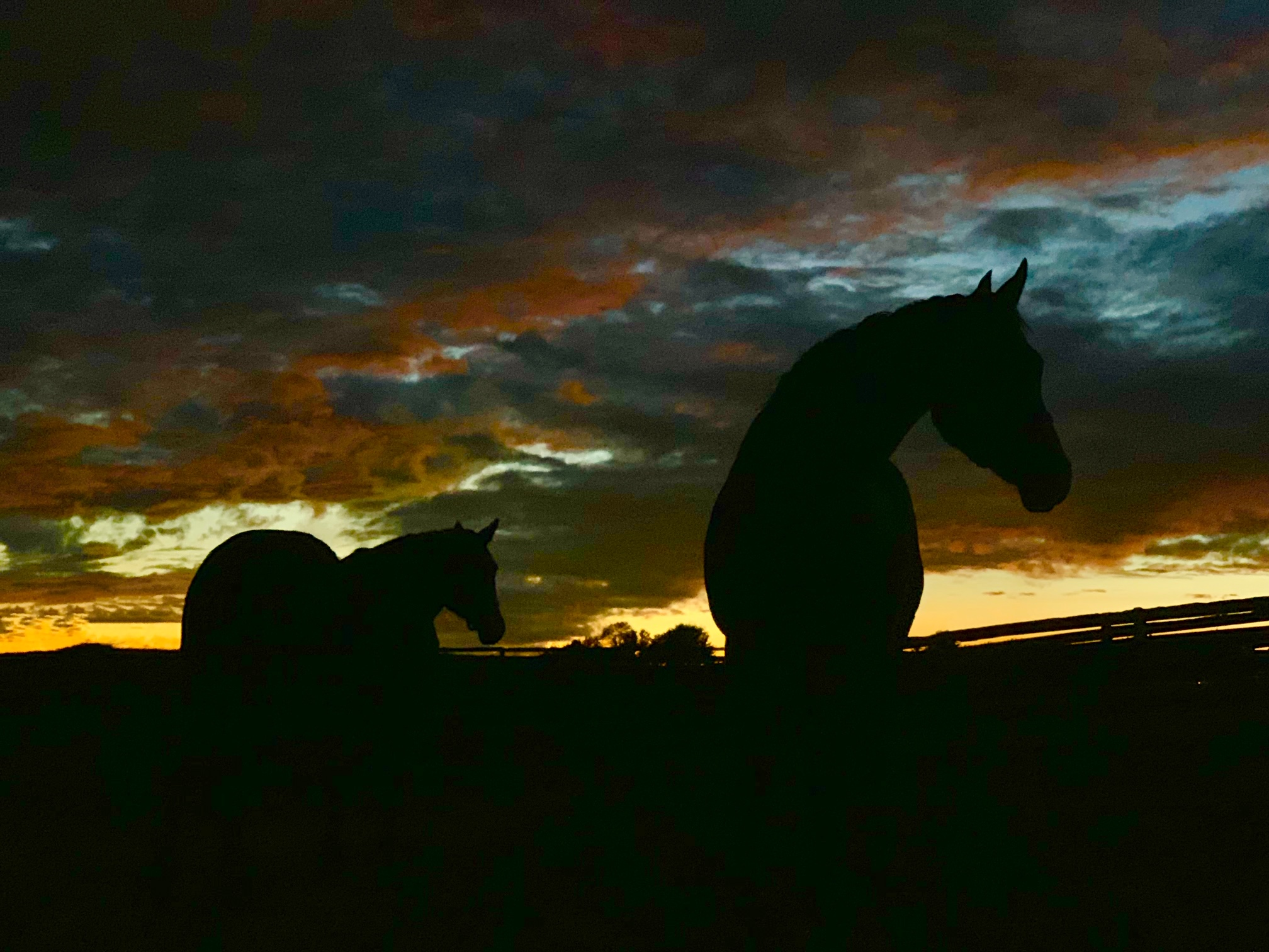 Mares in sanctuary at Foxie G look breathtakingly beautiful at sunset.