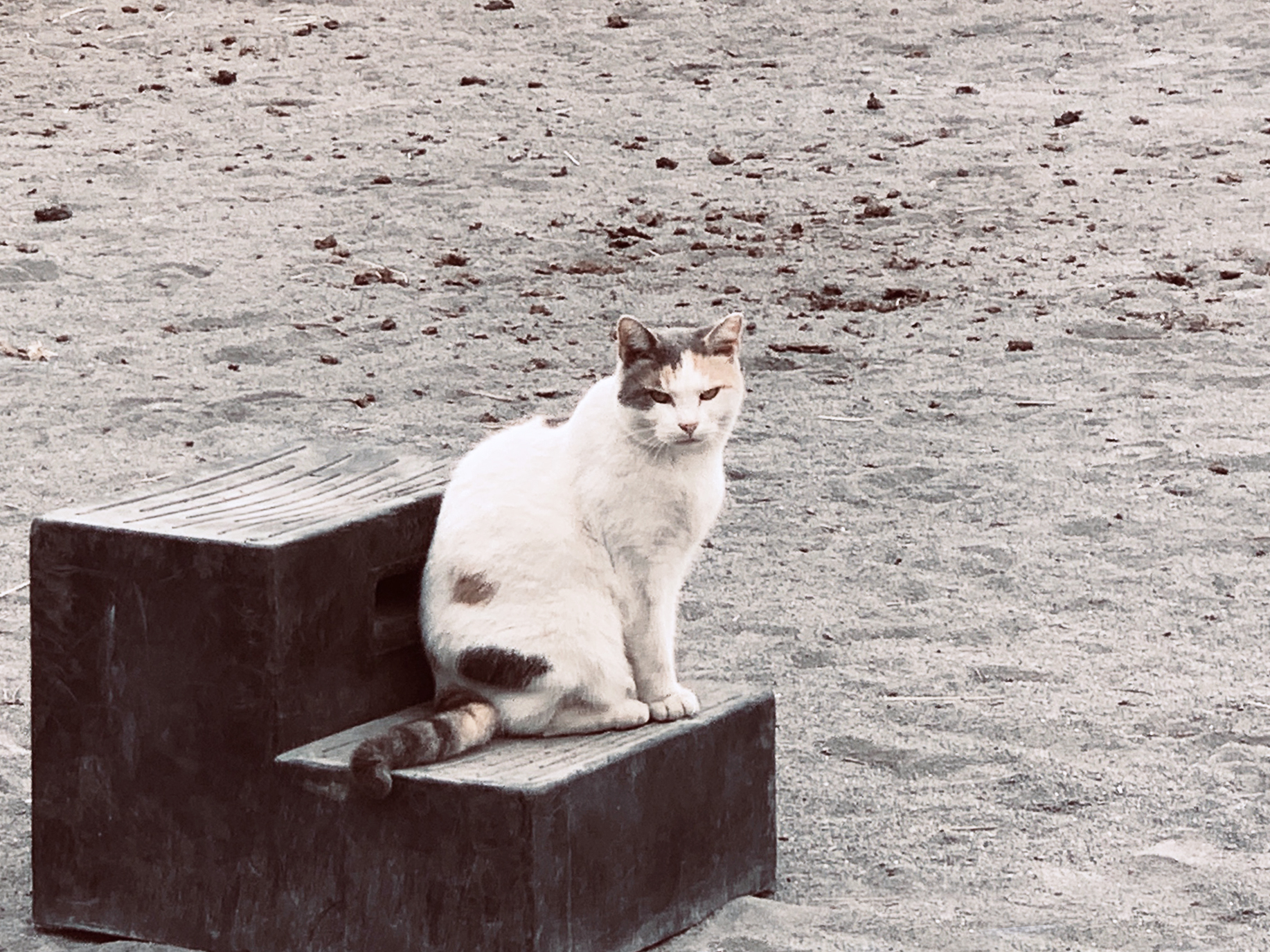 Missy, a main barn kitty, oversees a riding session.