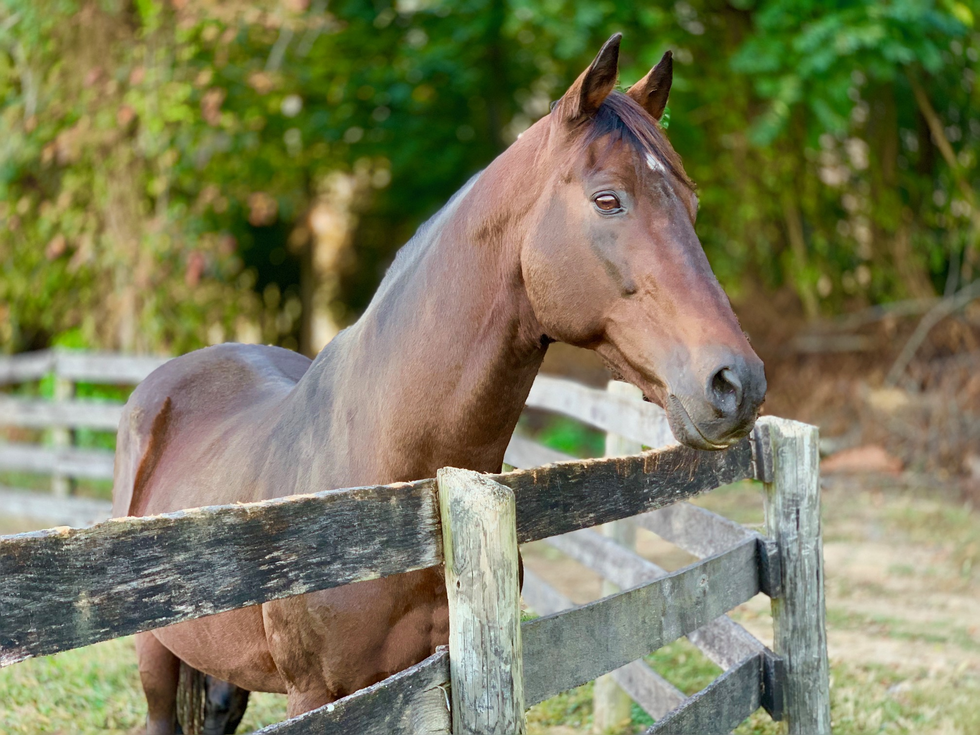 La Reine's Terms, with career earnings of $804,591, enjoying a cool fall afternoon.