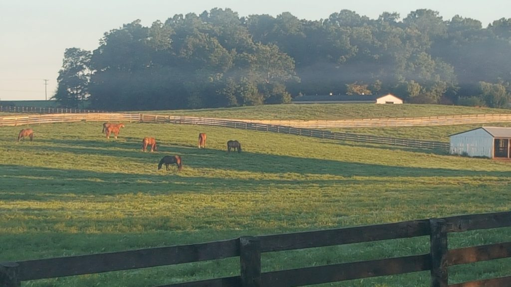 summer morning on the farm with horses grazing in a big field