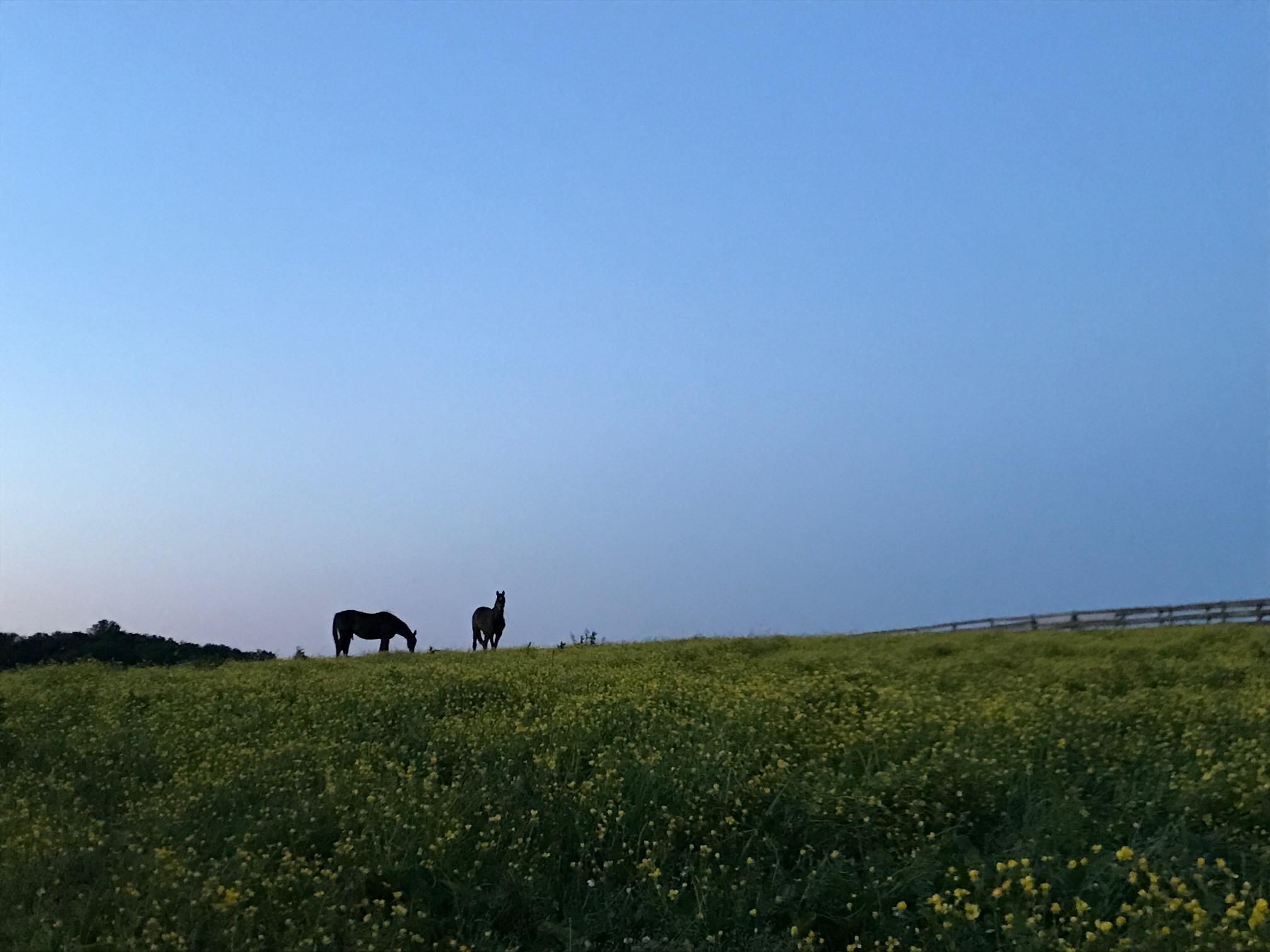 A peaceful evening on the farm.