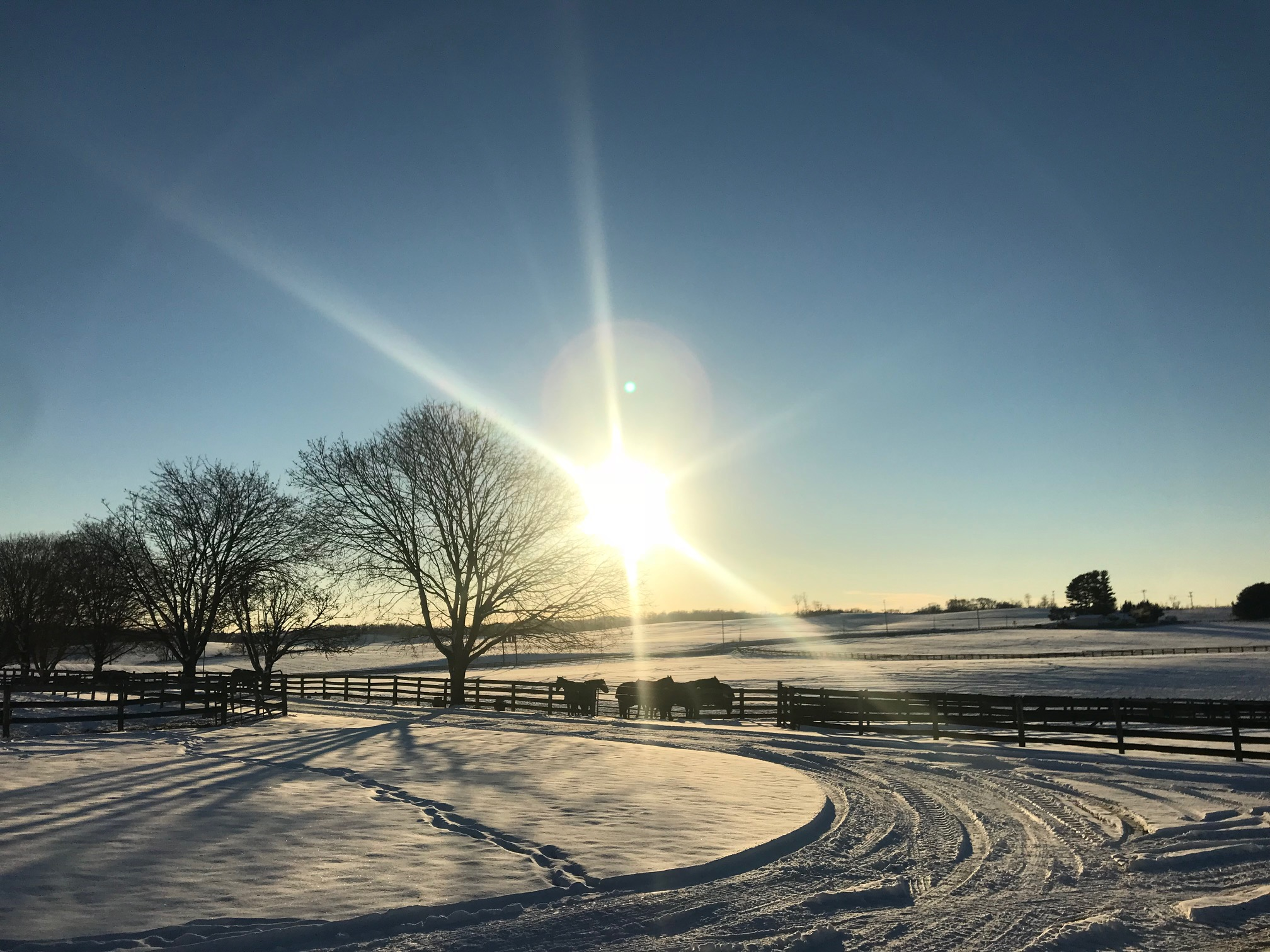 A snowy sunset on the farm.