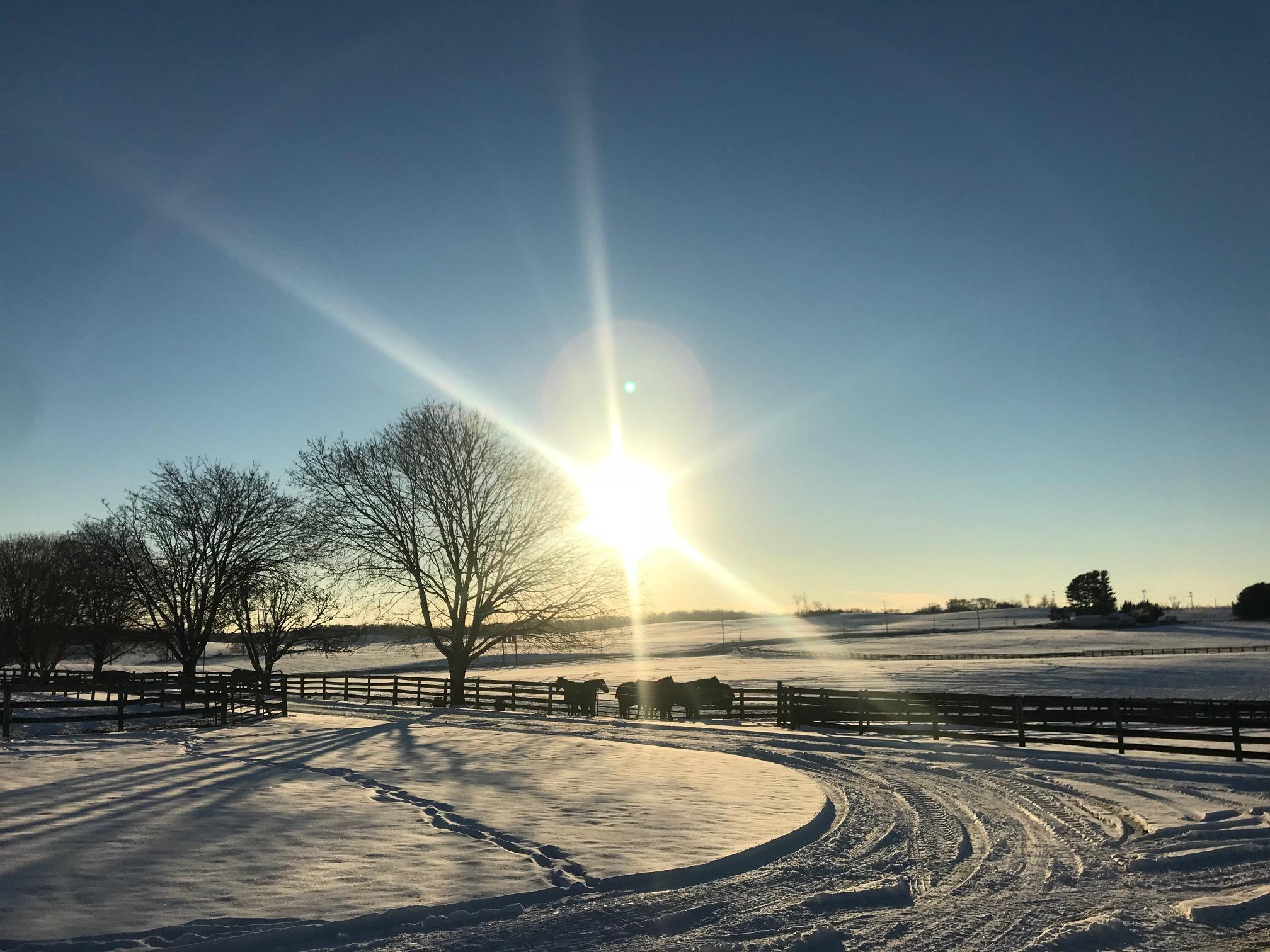 A snowy sunset on the farm.