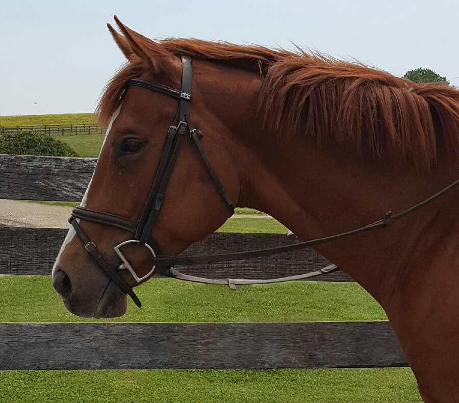 thoroughbred mare holly red rocket