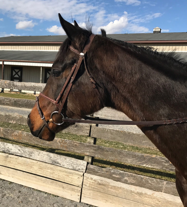 thoroughbred gelding he's achance