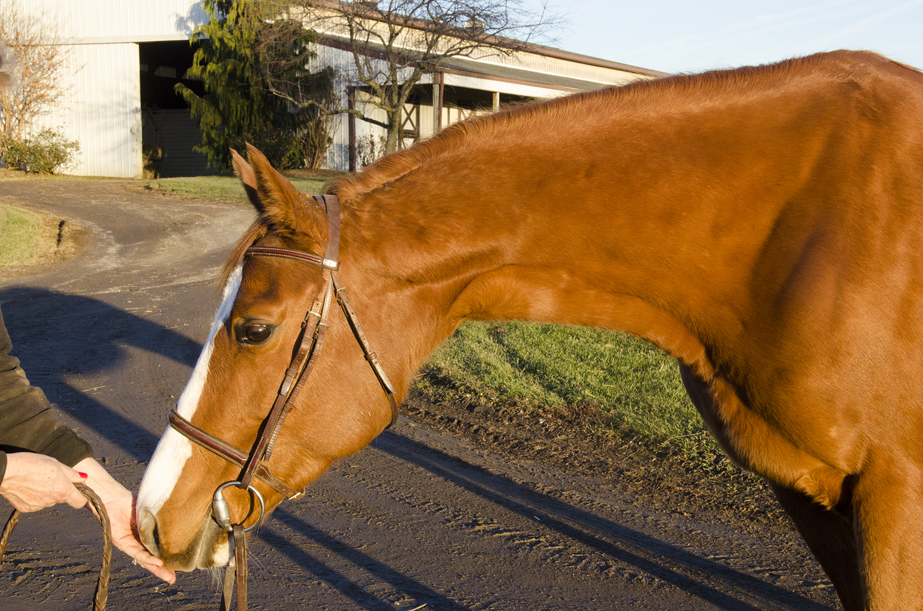 thoroughbred mare natures fancy