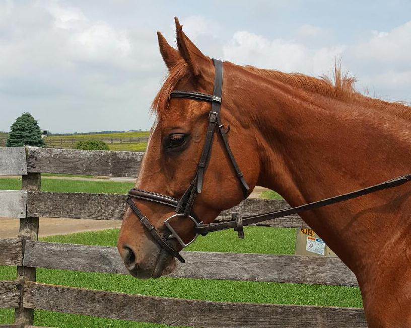thoroughbred mare so pleasin