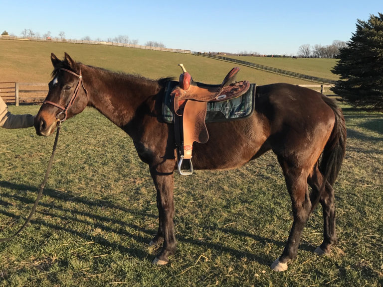thoroughbred mare meadow paddy