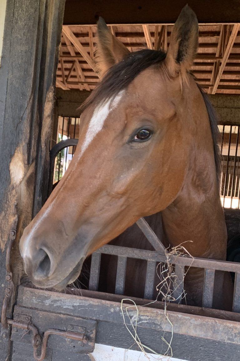 thoroughbred mare belle 'n tonic