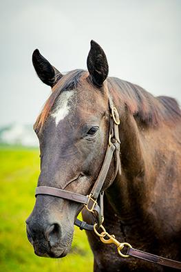 thoroughbred mare blum's rush