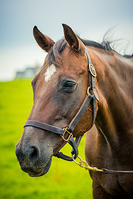thoroughbred mare crack the books