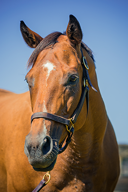 thoroughbred mare jewel power