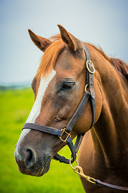 thoroughbred mare lina picky