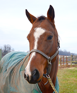 thoroughbred mare caliente kitty