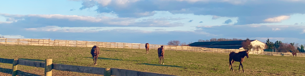 horses walking in a field at sunset